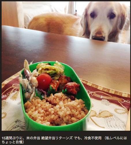 Windy the adorable Golden Retriever again fails to snag that human grub. (Via @1202yu)
