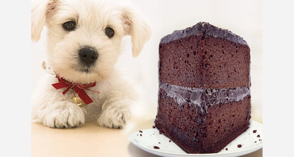 Imagine eating a cake the same height as you—you'd be scared too.