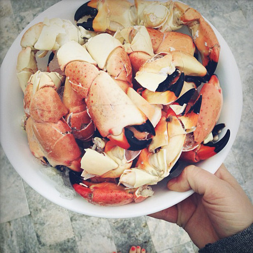 @nicole_franzen enjoys some stone crab during her tour of the Southern coast.