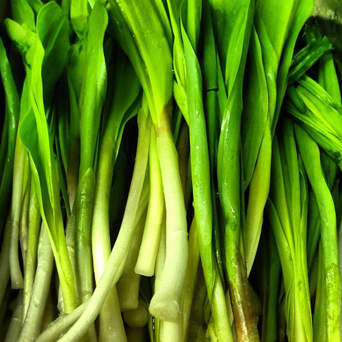 @empellon shows us our first ramps of this chilly season!
