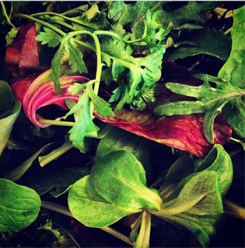 Fresh greens, including peppercress, mâché, and arugula at USQ Greenmarket.