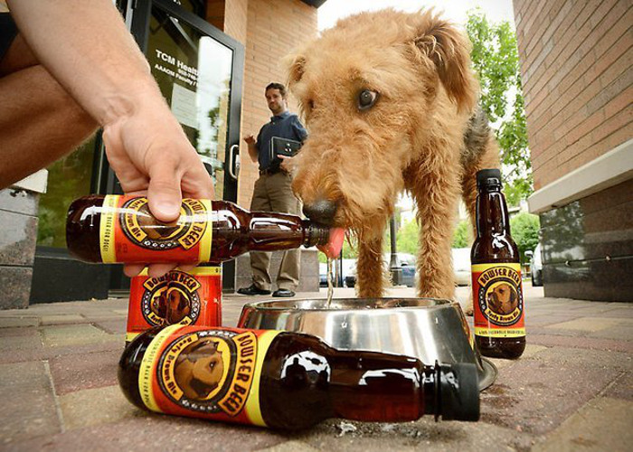 Browser Beer For Dogs.  $20.