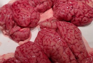 """Beautiful calves brains for tonight."""