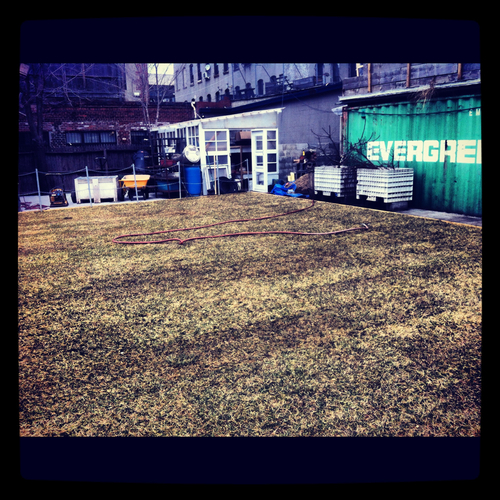 They provide updates on the progress of their lawn, a preeminent Bushwick party location.
