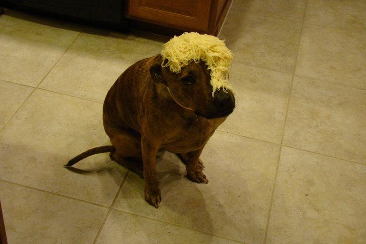 Spaghetti on my dog.