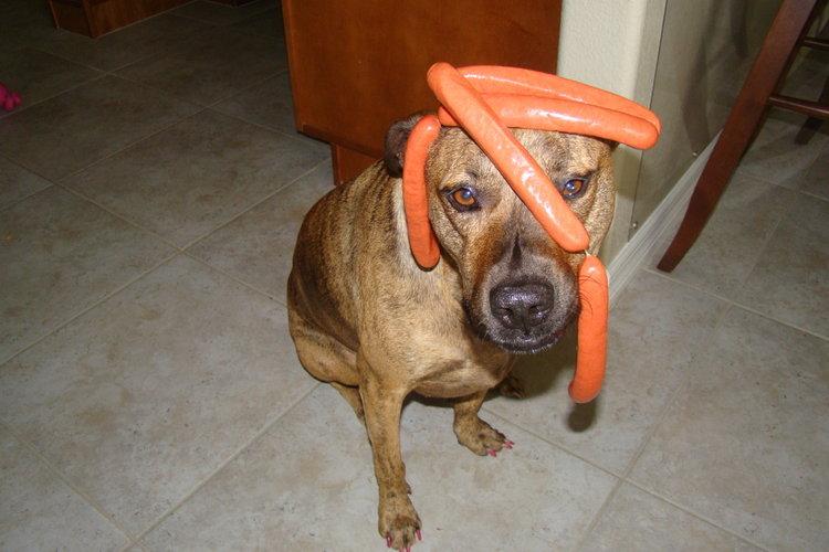 Hot Dog links on my dog.