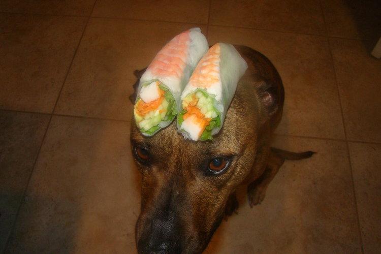 Sushi Summer Roll on my dog.