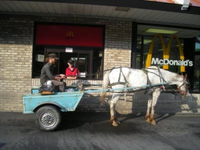Photo: Horse Nation