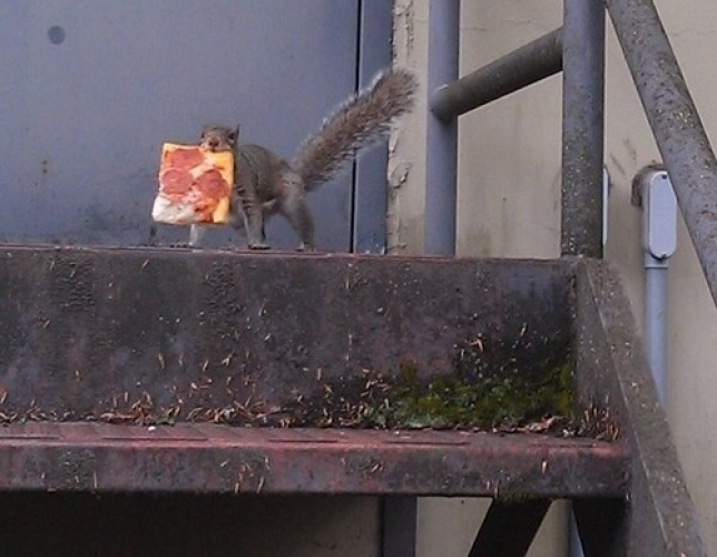 Squirrel Holding Pizza jpeg