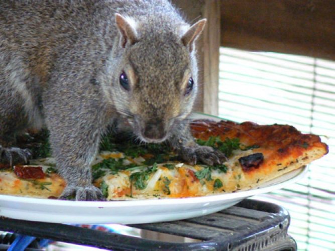 Squirrel Holding Pizzajpeg (2)