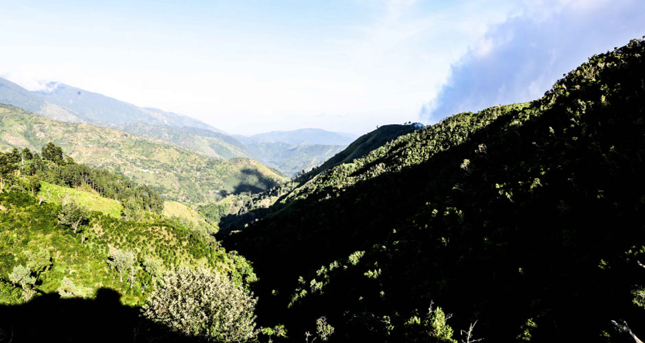 The Marley Coffee Farm, a 52­ acre private farm, sits atop the Blue Mountains in Chepstowe, Portland, Jamaica