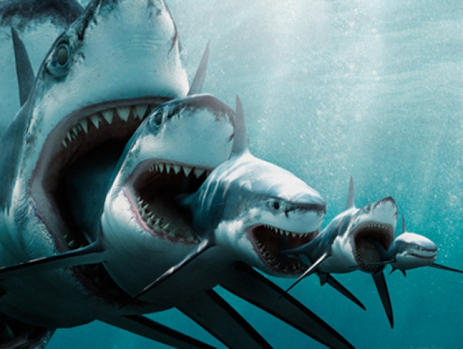Shark Eating Shark jpeg