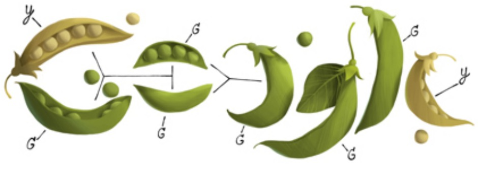 Gregor Mendel's 189th Birthday. Often called the father of modern genetics, Mendel used peas as his model plant and tested roughly 28,000 pea plants over 7 years. (Photo: Google)