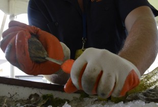 Click through the gallery to find out how to shuck an oyster without slicing your hand open.