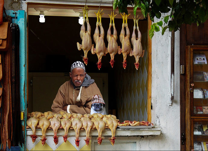 Poultry Dealers. Marrakech, Morocco (Photo:
