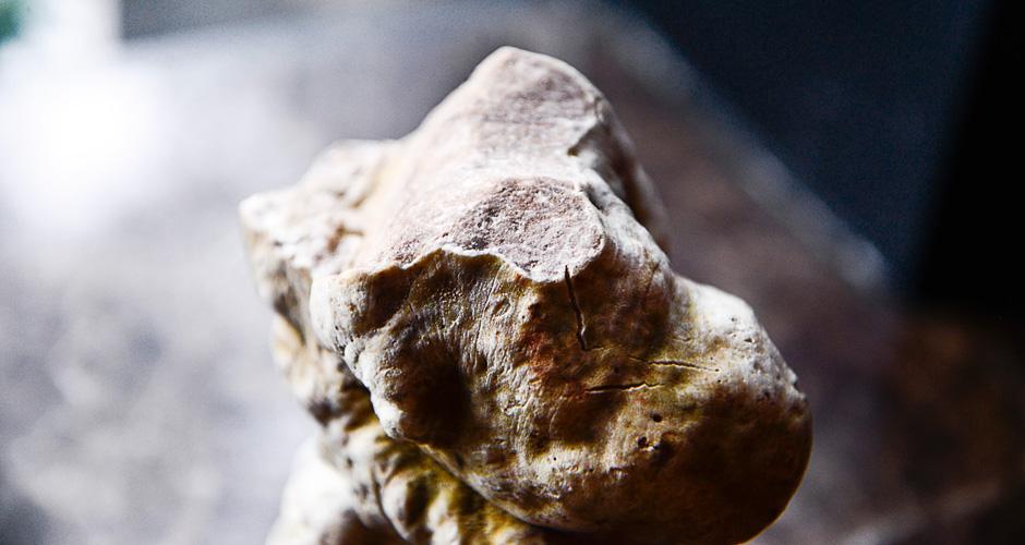 truffles_53