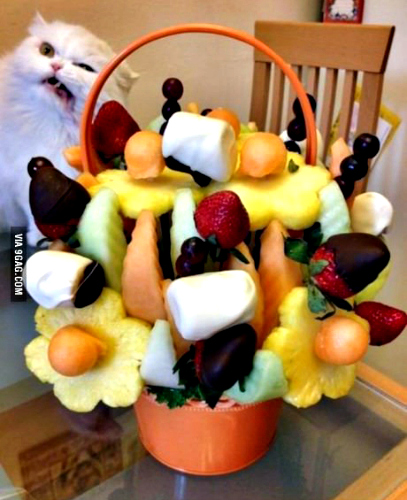 This cat doesn't appreciate Edible Arrangements, either. (Photo: Tumblr)