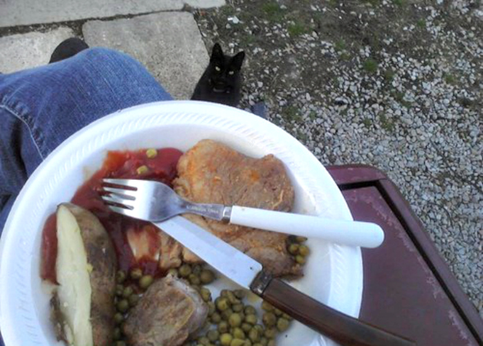 First off, this is a true #struggleplate. Still, that creepy-looking cat's going to snap those overcooked peas right off your lap. (Photo: This is Photobomb)