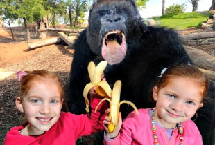 You decided to Instagram your cute children holding bananas, and then this happened. (Photo: Huffington Post)