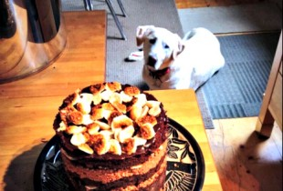 Momofuku Milk Bar chocolate-malt layer cake photobombed by your PUP. (Photo: