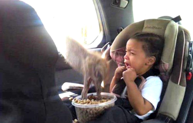 The car seat can't protect you from everything, kid. (Photo: This is Photobomb)