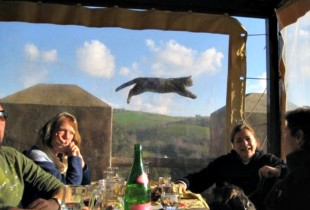 #FlyingCat = legend. (Photo: This is Photobomb)