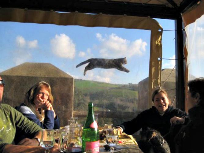 #FlyingCat = legend. (Photo: This is Photobomb)