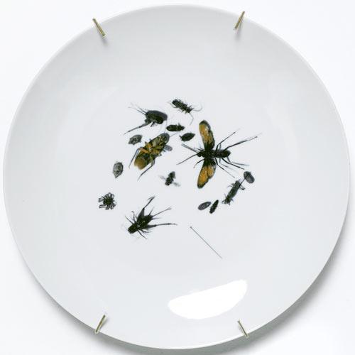 Untitled (Bugs)