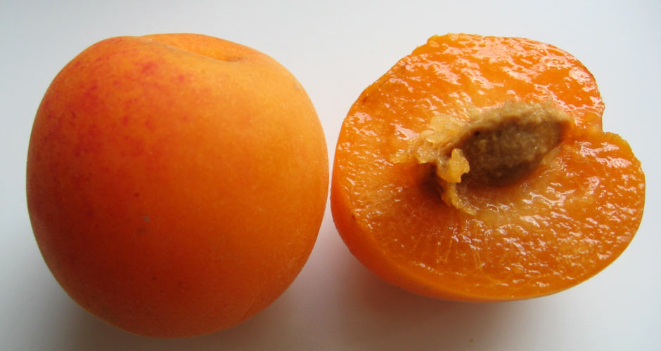 PLUMCOT Plumcots are another plum-apricot hybrid, developed by horticulturalist Luther Burbank in the late 19th century. Plumcots are 50% plum, 50% apricot.(Photo: Wikimedia Commons)