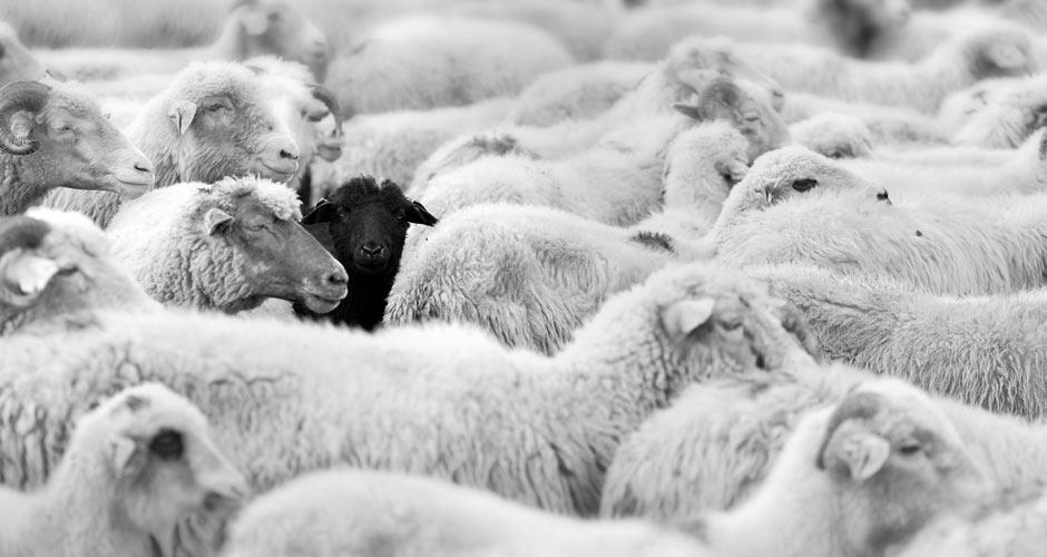 Photo: Modern Farmer