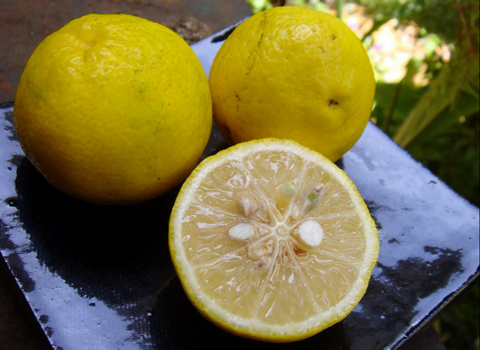 YUZU This Japanese citrus fruit is a marriage of mandarins and papedas (a citrus species native to Asia). The fruit is used in Japanese and Korean cooking, most notably as an ingredient in ponzu sauce. The prized yuzu zest combines the best flavors of Meyer lemon, mandarin orange, and grapefruit.(Photo: Wikimedia Commons)