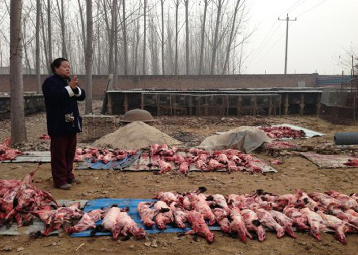 Skinned fox meat from a Chinese fur farm. (Photo: