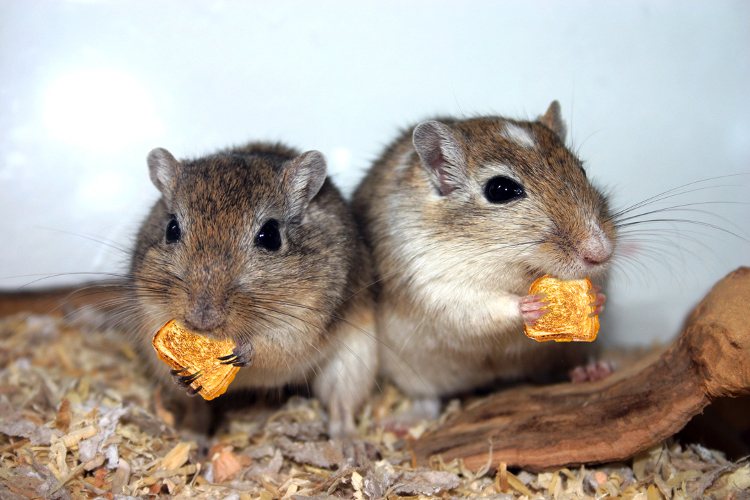 Photo: Grilled Cheese & Gerbils