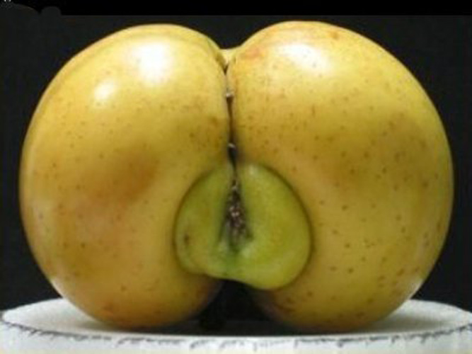 "This is where Nelly got the term ""apple bottom."" (Photo:"
