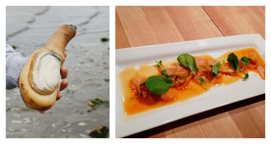 GEODUCKCulinary uses: Jokes about its shape aside, the geoduck (gooey-duck) is a kind of clam. It can be served sashimi-style or as a ceviche.Commonly used in: Korean and American cuisine(Photos: NOAA, The Satiated Pig)