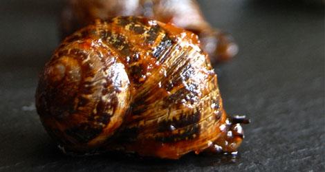 manzke_snails