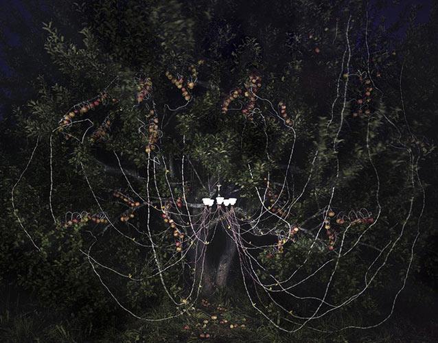 Apple Tree with Chandelier, Nettie Fox Farm, Newburgh, Maine 2013