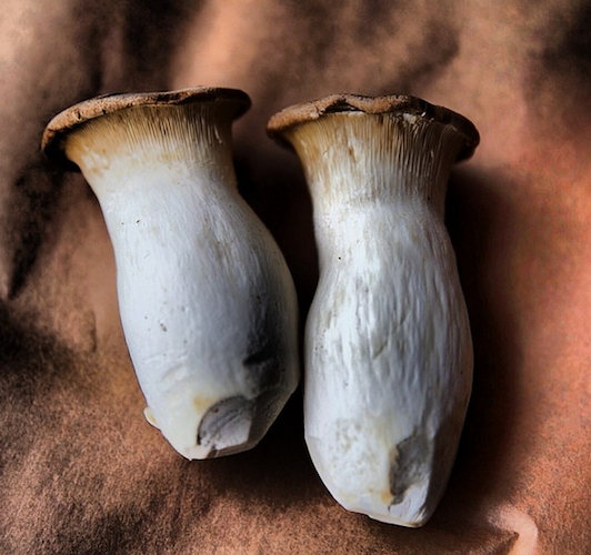 The most stunning shot of king oyster mushrooms we've ever seen. Photo: @alexelser