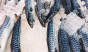 Norwegian mackerel takes the prize for most photogenic fish around. Photo: @bonappetitmag