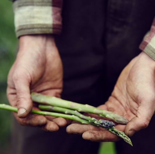 Spring asparagus perfection. Photo: