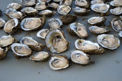 currence_oysters