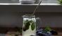 Honeysuckle mint lemonade is the prettiest lemonade we ever did see. Photo: