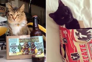 beercats