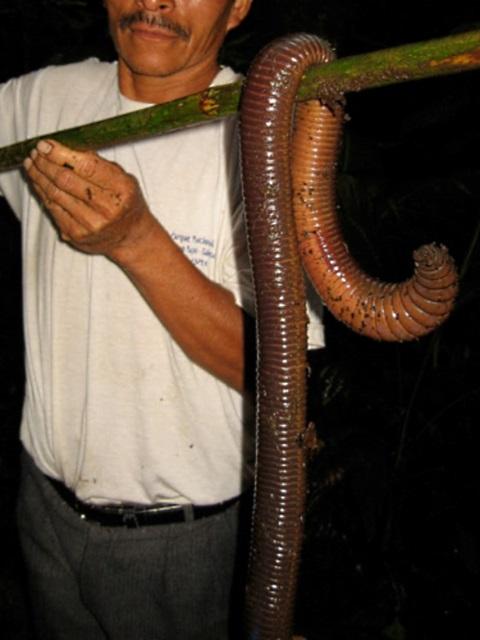 giant-worm-1