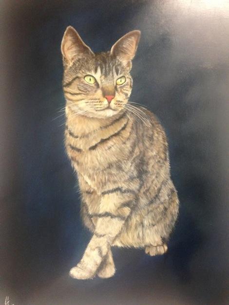 stupak_cats2
