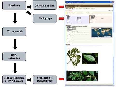 Barcoding steps Web