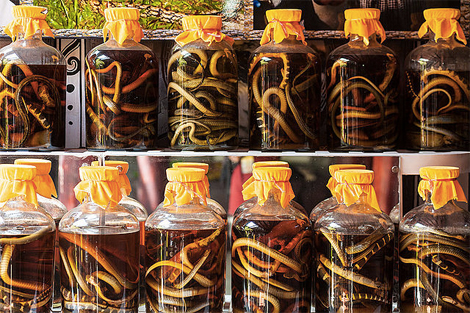 Snake wine. Photo: Wikimedia Commons