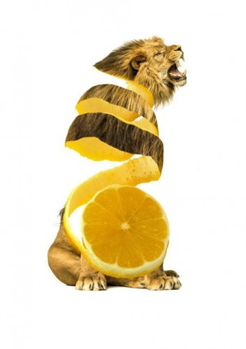 Graphic Artist Splices Animals With Fruits And Vegetables