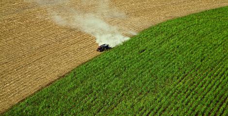 Sugarcane in Brazil. (Photo: Flickr/ Sweeter Alternative)