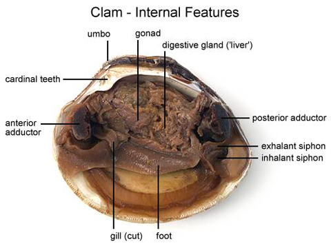 what daw does clams casino use
